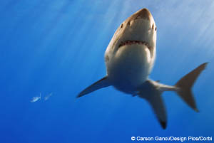 Wildlife Adoption and Gift Center: Adopt a Shark
